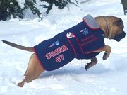 "Bulhavens Game Changer ""Gronk"" wearing his custom designed Posh Parka. Complements of Mary Hannigan."
